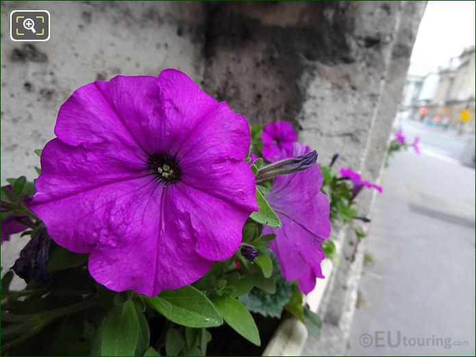 Flowers Under Jean-Claude Touche Memorial Plaque