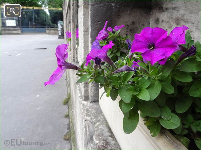 Flowers Michel Mouchet Memorial Plaque