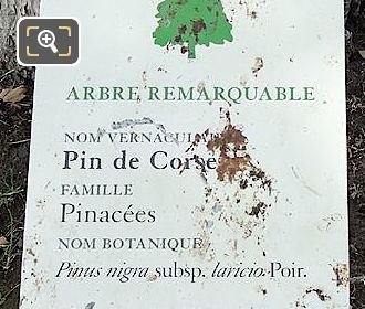 Tourist Info Plaque Pin De Corse Tree Jardin Tuileries