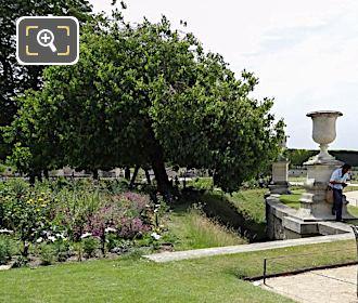 White Mulberry Tree Demi-lune Reserve Sud Garden