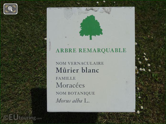 Tourist Info Plaque White Mulberry Tree Tuileries Gardens
