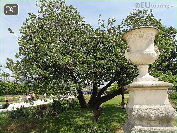 Jardin Des Tuileries Judas Tree Petit Reserve Sud