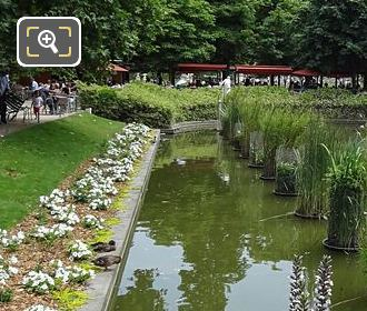 Jardin Tuileries Exedre Nord Pond Aquatic Plants