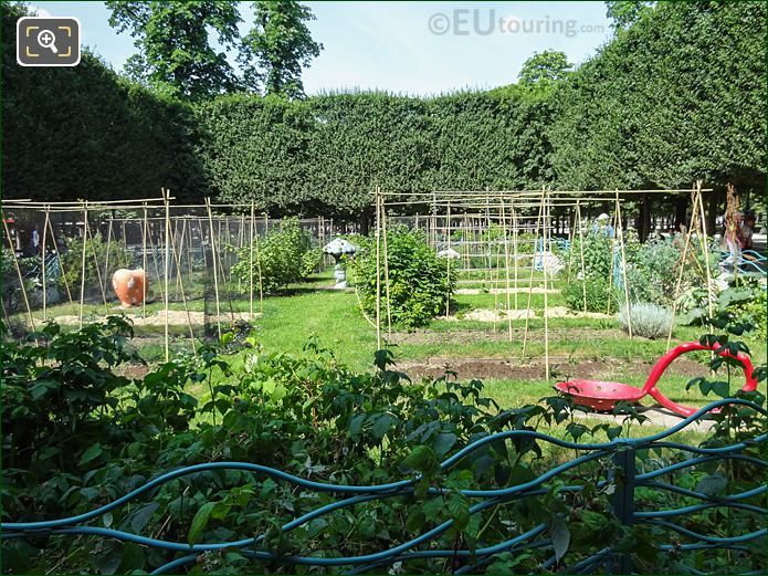 Vegetable Garden In Jardin Des Tuileries