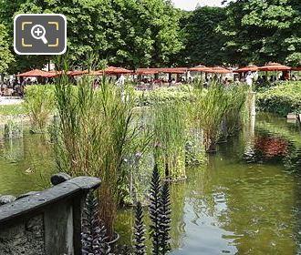 Aquatic Plants Exedra South Pond