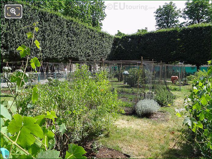 Vegetable Plants In Jardin Des Tuileries Potager