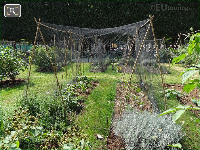 Plant Covers Jardin Des Tuileries Vegetable Garden