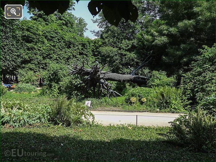 Bronze Tree Allee De Castiglione Jardin Des Tuileries Looking East