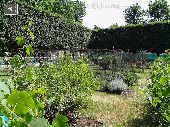 Vegetable Garden Inside Jardin Des Tuileries Looking South West