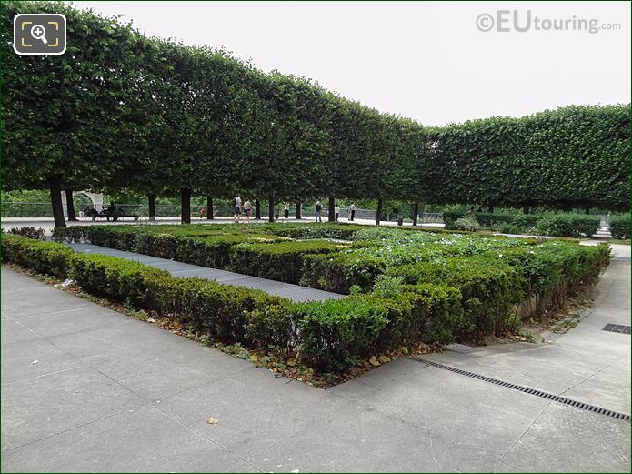 Terrasse Du Jeu De Paume Boxwood Hedges In Jardin Tuileries Looking South East