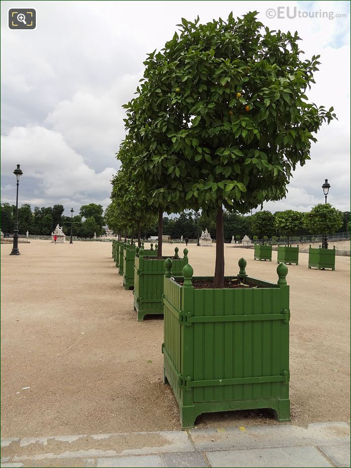 Fer A Cheval Orange Trees Inside Jardin Des Tuileries Looking South East