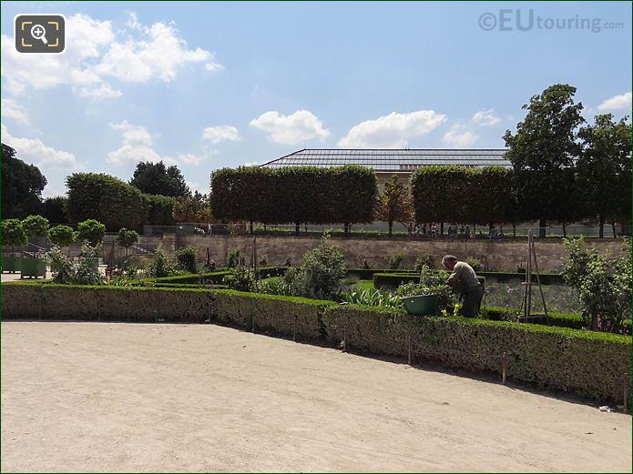 Rosaraie Sud Jardin Des Tuileries Looking SW